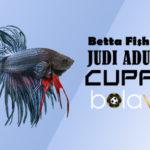 Judi Adu Ikan Cupang Online