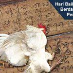 Hari Baik Ayam Aduan Berdasarkan Lontar Pengayam-Ayam